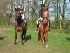 bixie-concours-nieuwleusen-2011-003-800