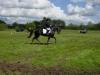 concours-lr-pc-huneruiters-2005-3-800